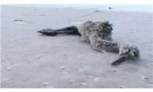 Çevre ve Şehircilik Bakanlığı Tuz Gölü'nden su çekilmesini 4 ay önce yasaklamış