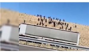 Niğde'de araziye bırakılan göçmenler, görüntüler sosyal medyaya düşünce yakalandı