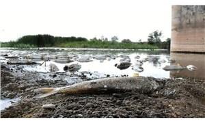 Kızılırmak'taki balık ölümlerinin nedeni belli oldu