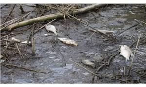 Alibeyköy Barajı'nda balık ölümlerinden sonra inceleme başlatıldı