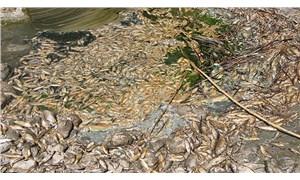 Asi Nehri'nde toplu balık ölümleri