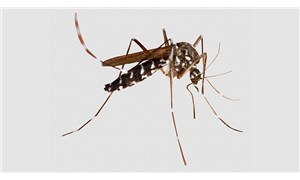 İstilacı sineklere karşı eylem planı