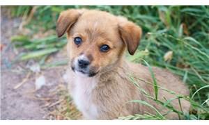 Sarıyer'de 1 aylık yavru köpeği yakarak öldürdüler