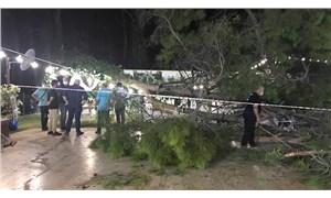 Antalya'da kır düğünü yapılan alandaki ağaç devrildi: 2'si ağır 10 yaralı