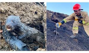 Adana'daki orman yangınında sansar yavrularını orman işçileri kurtardı