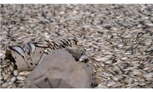 Konya'da balıklar oksijensizlikten öldü