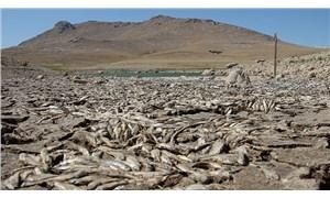Kuraklık: May Barajı'ndaki balıklar öldü