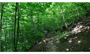 Bursa'da ormanlık alanlara girmek 1 aylığına yasaklandı