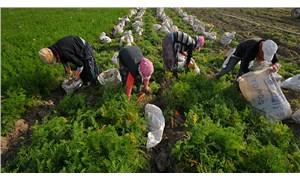 Tarım işçisinin temel sorunu: Barınma, beslenme, sağlık