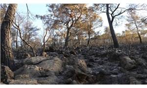 Fethiye'de alevler, 5 hektar ormanlık alanı küle çevirdi