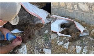 Kayalıklardan düşen bebek ayı kurtarıldı