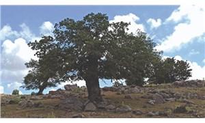 """İzmir'in ormanları için """"Bir Fidan Bir Dünya"""" kampanyası başladı"""
