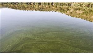 Müsilaja benzetilmişti: Eymir Gölü'ndeki kirliliğin nedeni belli oldu