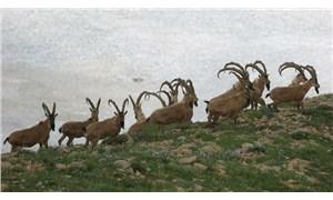 Ankara Barosu'ndan av iznine karşı dava