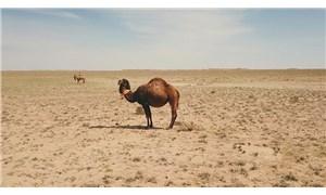 Kuraklık görülmemiş seviyede: Kazakistan'da 178 bin hektar alan kurudu