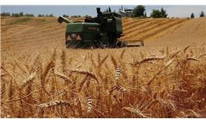 Yerli buğday 270, ithali 300 dolar