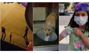 Kendisine havlayan köpeğe 5 el ateş etti, bir mermi de sokaktaki çocuğa geldi