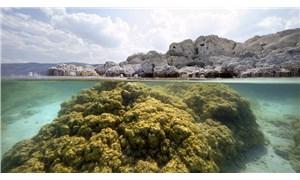 Salda Gölü'nün su altı zenginliği görüntülendi