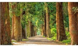 17 bin ağaç türü yok olma tehlikesi altında
