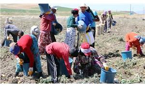 Tarım işçisi çocuklar yüz yüze eğitime dönemedi