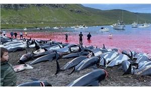 Faroe Adaları'ndaki festivalde 1428 balina ve yunus katledildi