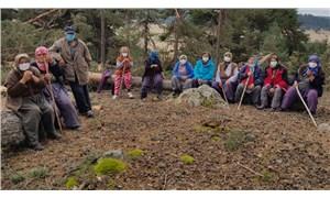 Taşocağı için 150 ağacı katlettiler!