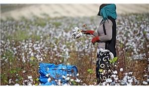 CHP'li Barut: Çiftçi desteklenirse pamukta 2 milyar dolarlık açık kapanır