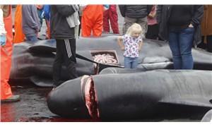 Faroe Adaları'nda 53 yunus daha katledildi