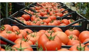 Rusya'ya gönderilen domateslerde virüs çıktı