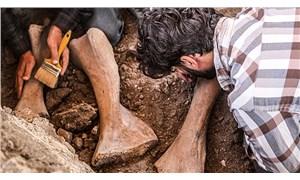 Maraş'ta bulunan fil fosilleri incelemeye alındı