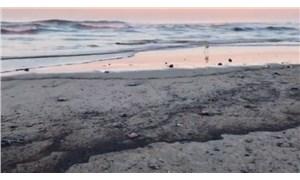 Kaliforniya'da çevre felaketi: Yaklaşık üç bin varil petrol suya karıştı