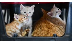 Ankara'da kedi tedavi ünitesi ve rehabilitasyon merkezi açıldı