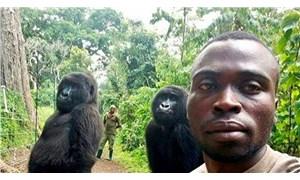 Poz veren goril Ndakasi yaşamını yitirdi