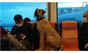 İstanbul'un seyahat seven köpeği Boji, dünya basınında