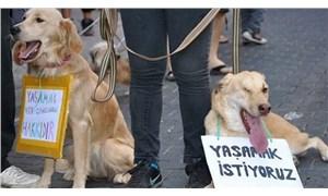 Dekan'ın hedefinde hayvan hakları var