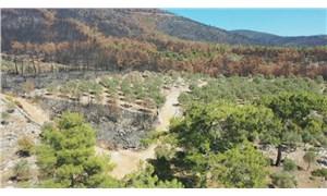 Bodrum'da yanan alanlar eski kimliğine kavuşacak
