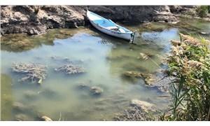 Türkiye'deki 8 göl incelendi: Siyonobakteri istilası gölleri çürütüyor