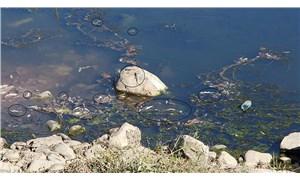 Su seviyesi düşen Dicle Nehri'nde ölü balıklar kıyıya vurdu