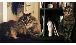 Kedilerin velayeti davasında emsal karar: Piraye ve Cingöz'ün psikolojisi de gözetildi