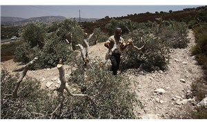 Filistin'de silahlar sussa da saldırılar sürüyor: İşgal  için tarım arazileri hedefte