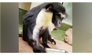 Dünyanın en yaşlı Diana maymunu yaşamını yitirdi
