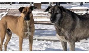 Bebek Parkı'nın kaçırılan köpekleri Nacho ve Bella geri getirildi