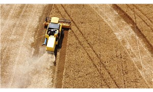 Kuraklık tahıl üretimini vurdu