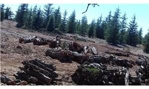 """""""Ardıç ağaçlarının katledilmesini durdurun"""""""