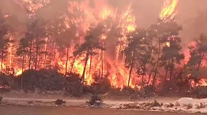 Muğla Milas'ta orman yangını
