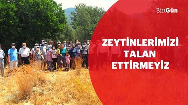Çiftçiler ayağa kalktı: Köyceğiz'de zeytinlik arazi Toki eliyle ranta açılıyor